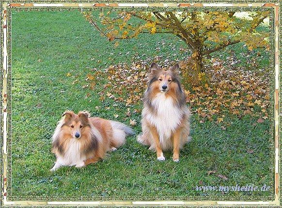 An den Beitrag angehängtes Bild: http://mysheltie.de/homepage/image/guestbook/november2007.jpg